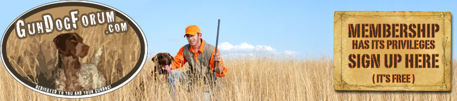 Hunting Dog Training & More