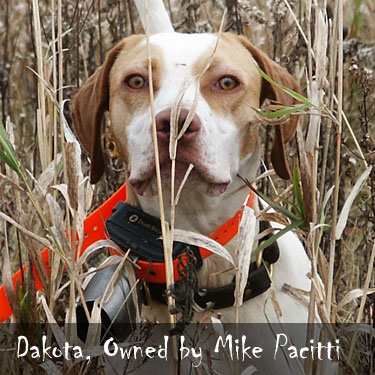 Gun Dog Forum Photo Contest
